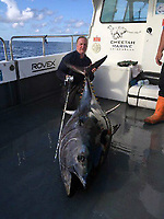 """Pictured: Andrew Alsop with the giant tuna he caught off the Pembrokeshre coast, Wales, UK.<br /> Re: What is thought to be one of the biggest fish ever landed from the sea in Wales was caught in Pembrokeshire waters.<br /> A magnificent blue fin tuna, weighing in at 504 pounds and measuring seven feet seven inches was brought on board the White Water charter craft, operating out of Neyland, while on a shark fishing expedition in the Celtic Deep, 45 miles out to sea.<br /> Skipper Andrew Alsop fought the powerful giant for two hours and 15 minutes as the tuna towed the boat for two-and-half miles.<br /> Describing it as """"the fish of a lifetime"""", Andrew, aged 48, said: """"We've had Welsh shark fishing records off the boat, but this was actually the first time, in 20 years, that I was both the skipper and the angler.""""<br /> Saundersfoot commercial fisherman Gavin Davies had chartered the boat for a day's shark fishing trip with his crew members Tom Watkins, Chris Watkins and Andrew Jones and friends Arno Tiesing and Dorian Thomas.<br /> When it was suspected that the tuna could be on the end of a line, Andrew passed over the controls of the boat to Gavin and took the rod for the battle of his life.<br /> """"I really didn't think we had any chance in a million years of holding it on the tackle,"""" he admitted. """"But it really was a day that was meant to be as I was able to let Gavin take over the controls.<br /> """"At one stage I thought 'I can't do this' - the fish was pinwheeling and fighting. But I had to land it, or it would just have been another fisherman's tale.<br /> """"I knew it would be big, but when it eventually came up it was even more massive than I thought. It took six of us to get it on board. We made sure we had plenty of photos then put him back in the water - he was pretty tired but hopefully he would be ok.<br /> """"It was an absolutely mad day, to be honest, and I'm aching all over this morning!""""<br /> Added Gavin: """"I'd gone with the boys for a day out shark fi"""