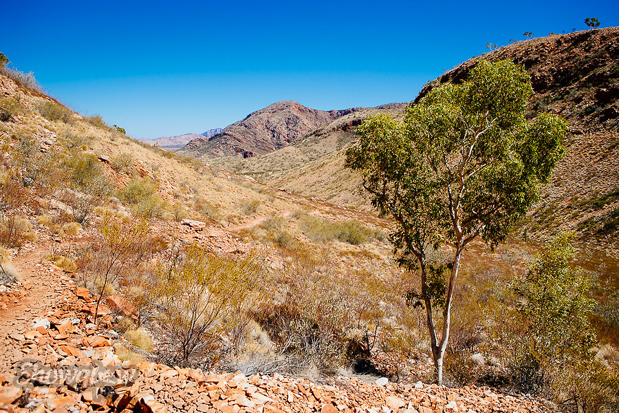 Image Ref: CA527<br /> Location: Ormiston Gorge, Northern Territory<br /> Date of Shot: 16.09.18