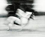 Juliet ( nee Watson ) Sykes. 1966ish. Juliet on her horse Flight.