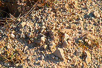 The soil with much lime stone at Mas de Gourgonnier, in Les Baux de Provence, Bouche du Rhone, France
