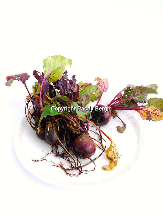 The beetroot is the taproot portion of the beet plant, also known in North America as the table beet, garden beet, red or golden beet, or informally simply as the beet. It is several of the cultivated varieties of beet (Beta vulgaris) grown for their edible taproots and their greens. <br />