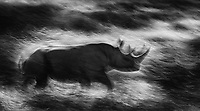 We saw a couple of black rhinos this time, though they were shy and constantly on the move. I purposely opted for motion blurs as we were bouncing along in our vehicle, since there wouldn't be an opportunity to capture any sharp portraits.