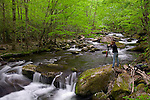 Great Smoky Mountains National Park, TN/NC<br /> Photographer on the Middle Prong Little River in Spring