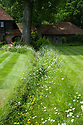 """A """"river"""" of ox-eye daisies leading to the foot of a large ash tree at the north end of the house, Vann House and Garden, Surrey, mid June."""