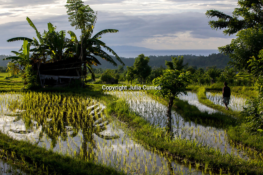 A man walks in a rice paddy in Bali, Indonesia.