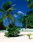 Jamaica, Portland, Port Antonio, Am Traumstrand Frenchman's Cove Beach | Jamaica, Portland, Port Antonio, Frenchman's Cove Beach
