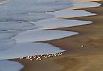 Seagulls, Ile de la Camargue, France