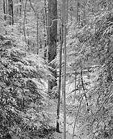 """""""Light Snow In The Forest"""" <br /> Great Smoky Mountains National Park, Tennessee<br /> <br /> This photo was taken a couple of hundred yards behind the Sugarlands Visitor Center shortly after light snow fell. The sky was bright enough to illuminate the scene well so the film was exposed and developed normally. The high resolution print looks especially """"crisp"""" which a scene such as this requires."""