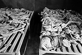 Gikongoro, Rwanda<br /> February 2004<br /> <br /> Skeletons of the people who died during the 1994 Rwandan genocide on display in a room at the Murambi Technical School, where nearly 50,000 ethnic Tutsis were killed in a period of 2 days. Some of the bodies were exhumed from the mass graves and placed on public display.
