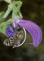 Blütenbesuch, Bestäubung