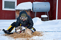 Veterinarian Heather Low examines a Ken Anderson dog at the village checkpoint of Ruby during the 2010 Iditarod