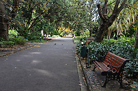 South Africa, Cape Town.  Government Avenue through The Company's Garden, established by the Dutch East India Company in 1652.
