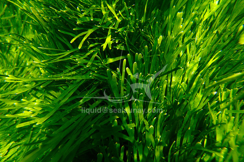 Seagrass Beds.Found in clear, shallow water due to their need for sunlight, these large beds of underwater grasses, predominately made up of turtle and manatee grasses, provide productive habitats for a great variety of juvenile fish and other marine life.