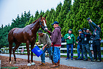 BALTIMORE, MD - MAY 18: Justify gets a bath as media gathers to catch a glimpse of the Kentucky Derby winner at Pimlico Racecourse on May 18, 2018 in Baltimore, Maryland. (Photo by Alex Evers/Eclipse Sportswire/Getty Images)