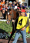 31 January 2009: Nicanor walks in the paddock before his first race, a maiden race at Gulfstream Park in Hallandale, Florida.