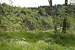 Europa, DEU, Deutschland, Nordrhein Westfalen, NRW, Eifel, Reichenstein, Bluehender Loewenzahn, Fruehling, Kategorien und Themen, Natur, Umwelt, Landschaft, Jahreszeiten, Stimmungen, Landschaftsfotografie, Landschaften, Landschaftsphoto, Landschaftsphotographie, Naturschutz, Naturschutzgebiete, Landschaftsschutz, Biotop, Biotope, Landschaftsschutzgebiete, Landschaftsschutzgebiet, Oekologie, Oekologisch, Typisch, Landschaftstypisch, Landschaftspflege......[Fuer die Nutzung gelten die jeweils gueltigen Allgemeinen Liefer-und Geschaeftsbedingungen. Nutzung nur gegen Verwendungsmeldung und Nachweis. Download der AGB unter http://www.image-box.com oder werden auf Anfrage zugesendet. Freigabe ist vorher erforderlich. Jede Nutzung des Fotos ist honorarpflichtig gemaess derzeit gueltiger MFM Liste - Kontakt, Uwe Schmid-Fotografie, Duisburg, Tel. (+49).2065.677997, ..archiv@image-box.com, www.image-box.com]