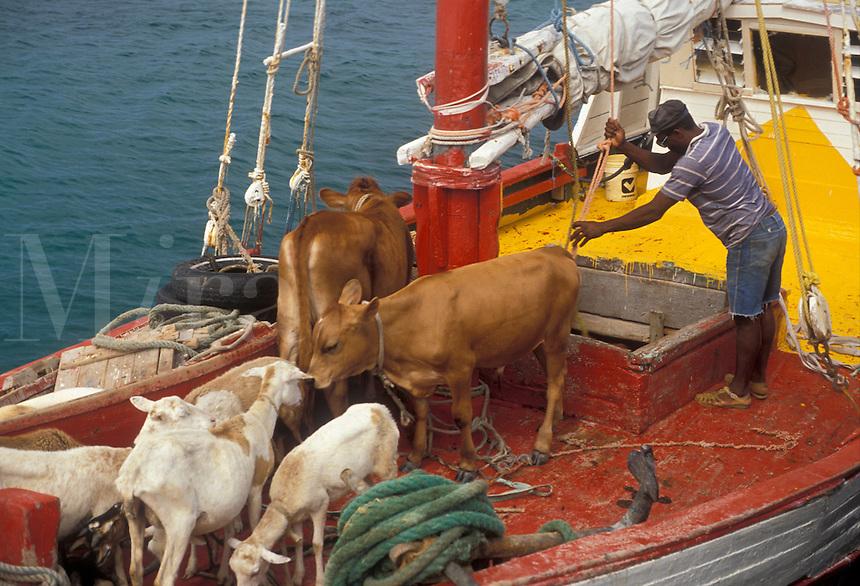 AJ2521, livestock, Caribbean, Grenada Grenadines, Caribbean Islands, Boat transporting livestock on the Caribbean to the island of Carriacou in the Grenada Grenadines (a British Commonwealth member).