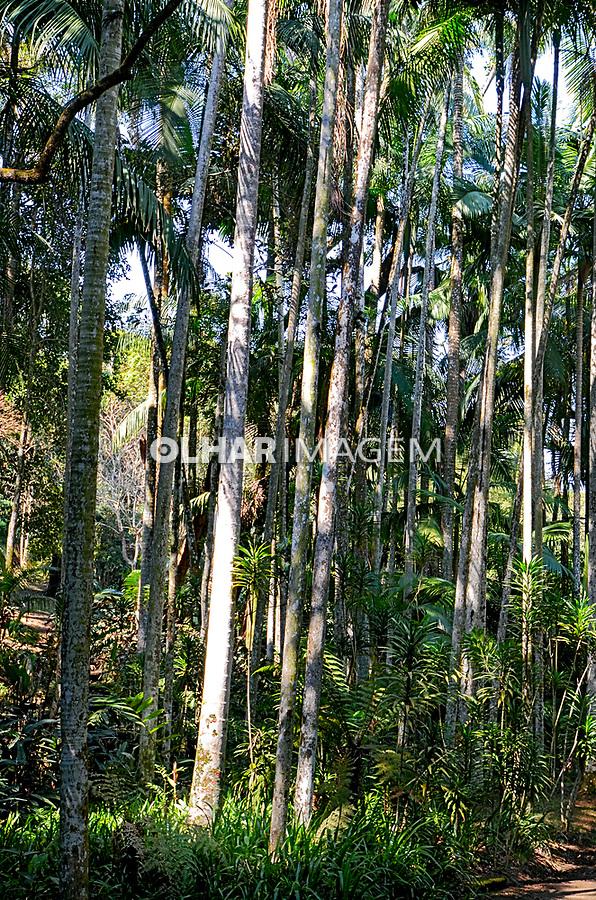 Bosque das Ímbuias, Jardim Botânico, Sao Paulo. 2021. Foto Juca Martins
