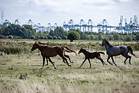 roadside horses <br /> <br /> Antwerp Port Epic 2020 <br /> One Day Race: Antwerp to Antwerp 183km; of which 28km are cobbles and 35km is gravel/off-road<br /> Bingoal Cycling Cup 2020