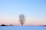 Europa, DEU, Deutschland, Nordrhein Westfalen, NRW, Rheinland, Niederrhein, Duesseldorf-Hubbelrath, Winter, Schnee, Abendstimmung, Daemmerung, Himmel, Einzelner Baum, Pappel, Kategorien und Themen, Natur, Umwelt, Landschaft, Jahreszeiten, Stimmungen, Landschaftsfotografie, Landschaften, Landschaftsphoto, Landschaftsphotographie, Wetter, Wetterelemente, Wetterlage, Wetterkunde, Witterung, Witterungsbedingungen, Wettererscheinungen, Meteorologie, Wettervorhersage....[Fuer die Nutzung gelten die jeweils gueltigen Allgemeinen Liefer-und Geschaeftsbedingungen. Nutzung nur gegen Verwendungsmeldung und Nachweis. Download der AGB unter http://www.image-box.com oder werden auf Anfrage zugesendet. Freigabe ist vorher erforderlich. Jede Nutzung des Fotos ist honorarpflichtig gemaess derzeit gueltiger MFM Liste - Kontakt, Uwe Schmid-Fotografie, Duisburg, Tel. (+49).2065.677997, ..archiv@image-box.com, www.image-box.com]
