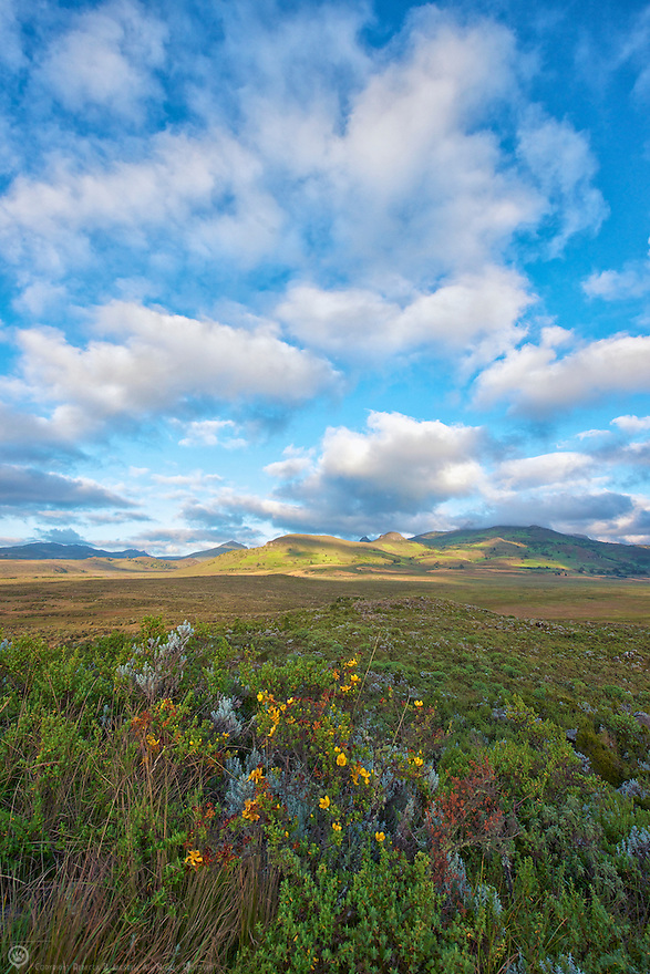 The northern portion of the Bale Mountains National Park is a grassland called Gaysay where Mountain Nyala, Bushbuck and Duiker roam.