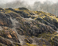Colours and textures in alpine environment, Nelson Lakes National Park, New Zealand, NZ