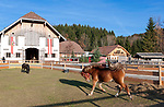 Oesterreich, Salzburger Land, Henndorf am Wallersee: Gut Aiderbichl - Gnadenhof fuer alte und misshandelte Tiere, Pferd | Austria, Salzburger Land, Henndorf at Waller Lake: Manor Aiderbichl - animal sanctuary for old and abused animals, horse