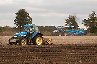 7-10-2021 Topping and lifting potatoes in the Lincolnshire Fens <br /> ©Tim Scrivener Photographer 07850 303986<br />      ....Covering Agriculture In The UK....