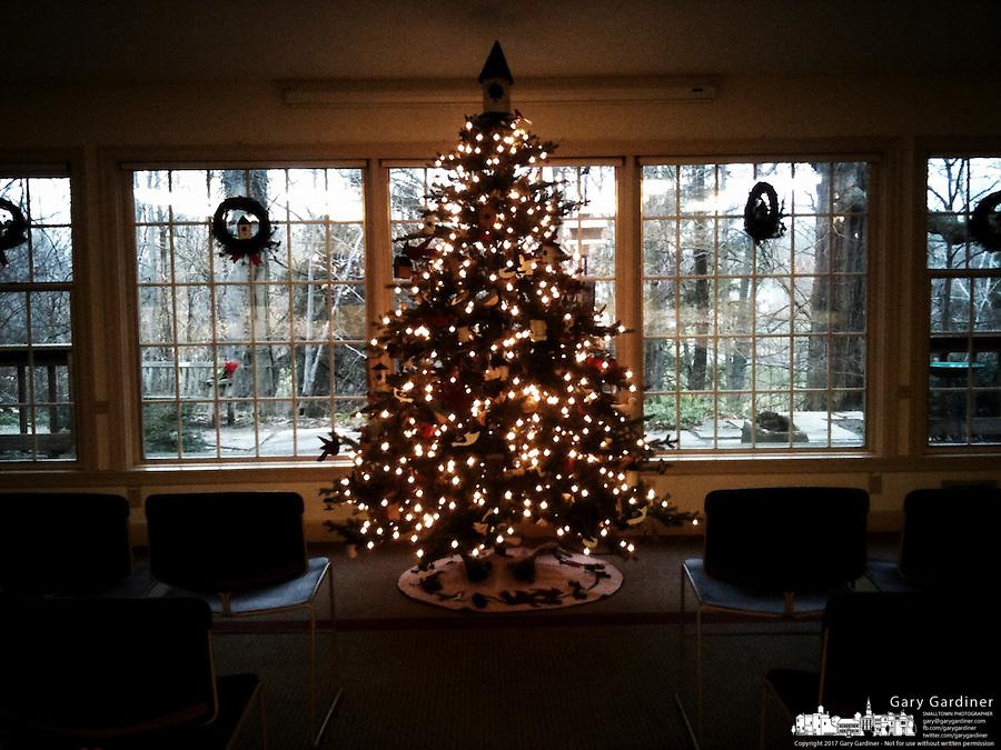Christmas tree in meeting room at Inniswood Metro Gardens