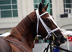 September 06, 2014:  Take Charge Brandi in the paddock before the G2 Pocahontas Stakes at Churchill Downs.  (Giant's Causeway x Charming, by Seeking the Gold) She is out of a half sister to Will Take Charge and is owned by Willis Horton and trained by D. Wayne Lukas.©Mary M. Meek/ESW/CSM