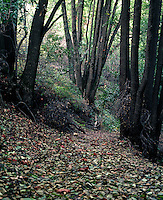 Path with autumn leaves through a wooded area.
