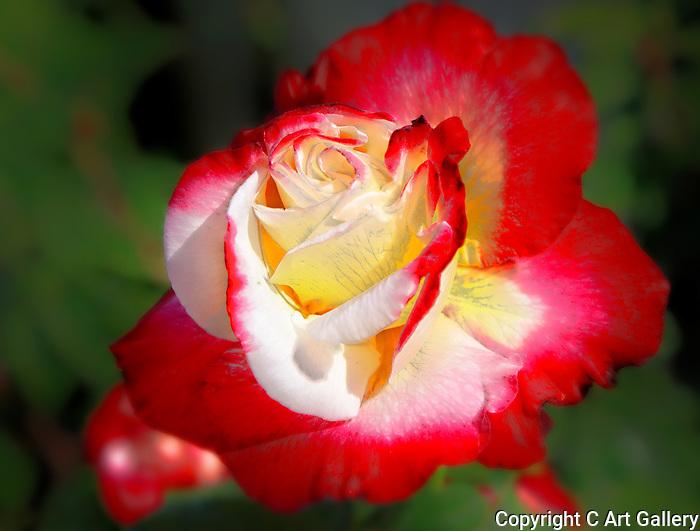Flowers of Balboa
