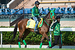 SHA TIN,HONG KONG-DECEMBER 08 : Once In a Moon,trained by Makoto Saito,exercises in preparation for the Hong Kong Sprint at Sha Tin Racecourse on December 8,2017 in Sha Tin,New Territories,Hong Kong (Photo by Kaz Ishida/Eclipse Sportswire/Getty Images)
