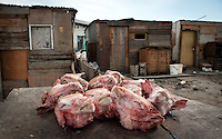 """Known locally as """"Smiley's"""" these sheep heads are considered a delicacy in the townships of South Africa. The heads will be cooked and sold to passes by. Everything from the eyes, tongue and brains are eaten."""
