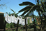 Drying Sheets