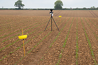 27-5-2021 Aphid traps and a weather station in a sugar beet field <br /> ©Tim Scrivener Photographer 07850 303986<br />      ....Covering Agriculture In The UK....