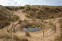 Dune slack, habitat of natterjack toad. Ainsdale Nature Reserve, Merseyside, UK. May. Photographer: Alex Hyde