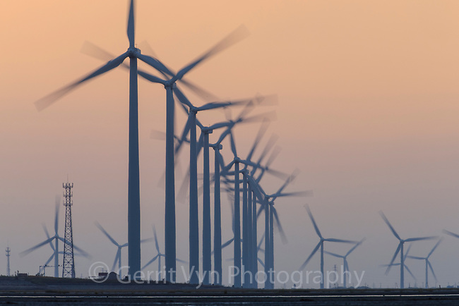 Huge installations of offshore wind turbines pose another obstacle to migratory shorebirds in the Yellow Sea. Rudong, China. October.