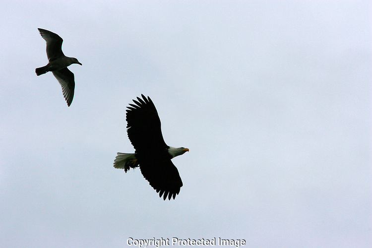 Eagle and Gull share the same airspace.