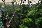 Tourist and view across the forest from the canopy walkway. Danum Valley, Sabah, Borneo.