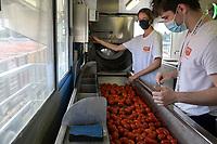 ITALY, Parma, Basilicanova, tomato canning company Mutti s.p.a., founded 1899, fresh plum tomatoes are conserved as canned tomato, pulpo, passata and tomato concentrate / ITALIEN, Parma, Basilicanova, Tomatenkonservenfabrik Firma Mutti spa, die frisch geernteten Flaschentomaten werden zu Dosentomaten, Passata und Tomatenmark verarbeitet und konserviert, alles 100 Prozent Italien, Anlieferung vom Feld, Qualitätskontrolle