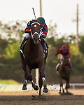 April 18, 2021: SECRET ROSE, ridden by Juan Carlos Díaz, win the sixth edition of the Clasico Vuelve Candy B. at Hipódromo Camarero in Canóvanas, Puerto Rico on April 18, 2021 (Carlos Calo/Eclipse Sportswire/CSM)