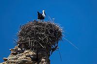 Europe, Espagne, Navarre,  Bardenas Reales,  Valtierra:  Nid de cigogne  // Europe, Spain, Navarre,  Bardenas Reales :  Ciconia nest