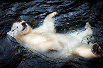 Polar bear is loving life as he relaxes in the water by Antje Wenner-Braun