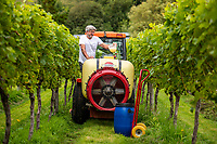BNPS.co.uk (01202 558833)<br /> Pic: MaxWillcock/BNPS<br /> <br /> Pictured: Simon pouring cheese whey into his tractor tank.<br /> <br /> A bio-dynamic vineyard has found a way to use the perfect pairing of cheese and wine to protect its grapes.<br /> <br /> Little Waddon Vineyard is trialling using whey left over from the cheese-making process as a natural fungicide to treat downy mildew.<br /> <br /> The organic vineyard in Dorset decided to give the new method a try after a wet and dismal summer saw its vines get infected.