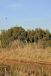 Israel, Southern Coastal Plain. Lachish Park on the southern bank of Lachish stream