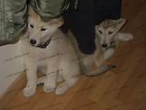 Star & Silver's first three weeks with me and Brutus.