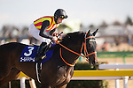 FUCHU,JAPAN-FEBRUARY 19: Gold Dream,ridden by Mirco Demuro, prepares for the February Stakes at Tokyo Racecourse on February 19,2017 in Fuchu,Tokyo,Japan (Photo by Kaz Ishida/Eclipse Sportswire/Getty Images)