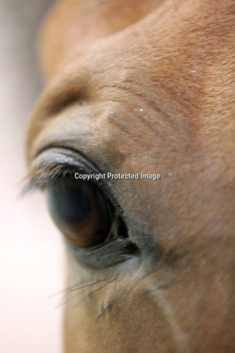 August 09, 2009: General view. Longines International Grand Prix. Failte Ireland Horse Show. The RDS, Dublin, Ireland.