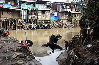 A rooster jumps over a small water channel in the slums of central Jakarta. Many of Jakarta's poorest residents live just inches above the waterline. In this community it only requires 2-3 hours of rain before flooding begins and evacuations have to take place.